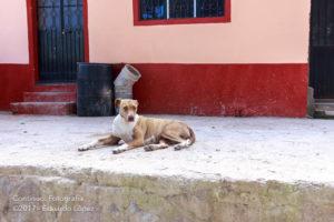 Perro en San Leonel